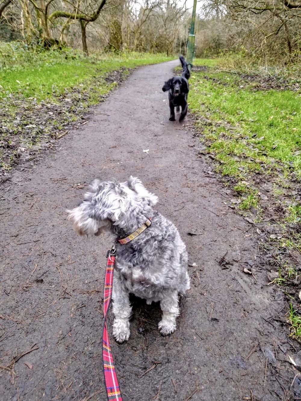 dog-walking-2.jpeg