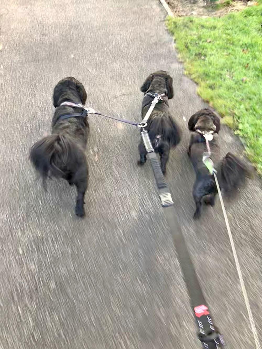 3-dog-walk.jpg
