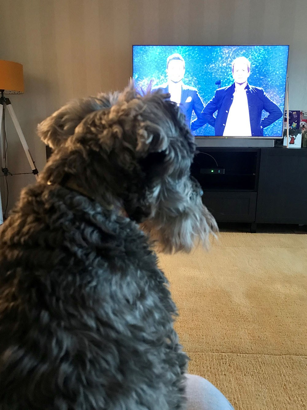 Eddie-Dog.jpg - Eddie Dog